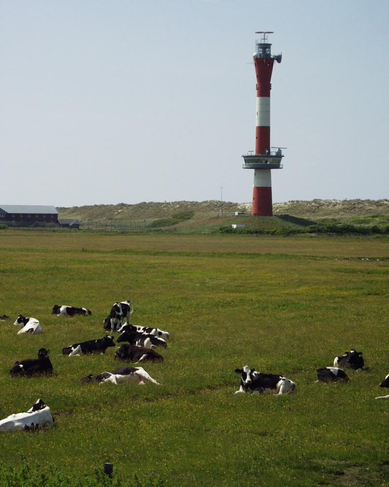 Leuchtturm mit Kuh